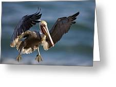 Brown Pelican Flying California Greeting Card
