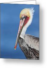 Brown Pelican Head Shot Greeting Card