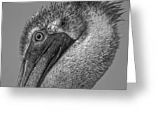 Brown Pelican In Black And White Greeting Card