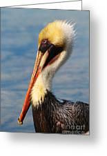 Brown Pelican In Morning Sun Greeting Card