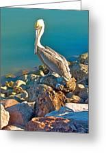 Brown Pelican In San Carlos-sonora Greeting Card
