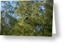 Brown Pelican In The Trees Greeting Card