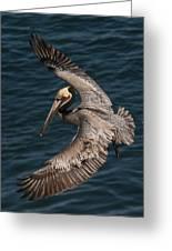 Brown Pelican Landing 2 Greeting Card