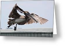 Brown Pelican Landing Greeting Card