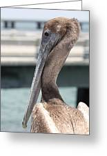 Brown Pelican Portrait Greeting Card