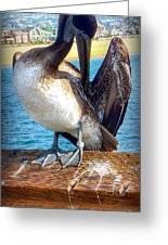 Brown Pelican Preen  Greeting Card