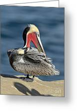 Brown Pelican Preening Greeting Card