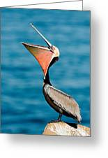 Brown Pelican Showing Pouch Greeting Card
