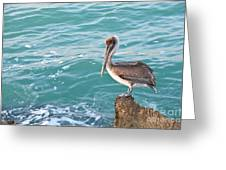 Brown Pelican South Jetty Venice Florida Greeting Card