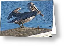 Brown Pelican Takes Flight Greeting Card