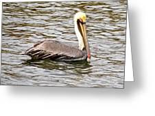 Brown Pelican1 Greeting Card