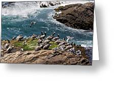 Brown Pelicans And Gulls On The Reef Greeting Card
