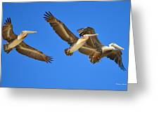 Brown Pelicans In Flight Greeting Card