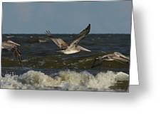 Brown Pelicans In Flight Greeting Card