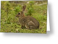 Brown Rabbit Greeting Card