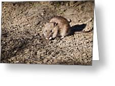 Brown Rat Greeting Card