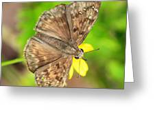 Brown Skipper Butterfly Square Greeting Card