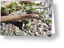 Brown Snake Greeting Card