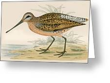 Brown Snipe Greeting Card