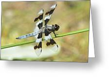 Brown Striped Double Winged Dragonfly Greeting Card