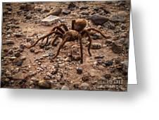 Brown Tarantula Greeting Card