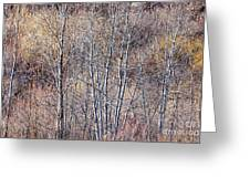 Brown Winter Forest With Bare Trees Greeting Card