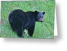 Browsing Black Bear Greeting Card