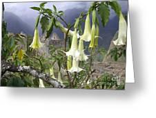 Brugmansia At Machu Picchu Greeting Card