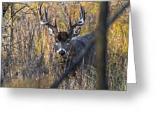Brush Buck Greeting Card