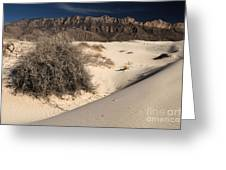 Brush In The Dunes Greeting Card