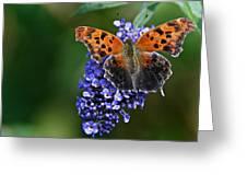 Brushfoot Satyr Comma Greeting Card