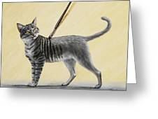 Brushing The Cat - No. 2 Greeting Card