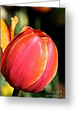 Brushstrokes By Tulip Greeting Card