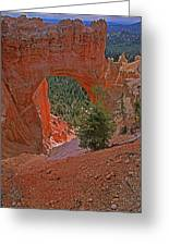 Bryce Canyon Natural Bridge And Tree Greeting Card