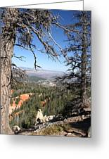 Bryce Canyon Overlook With Dead Trees Greeting Card