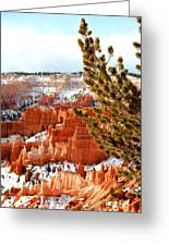 Bryce Canyon Pine Side Greeting Card