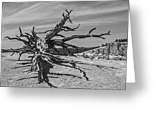 Bryce Canyon Tree Art Greeting Card