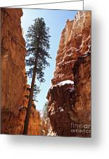 Bryce Canyon Wall Street Greeting Card