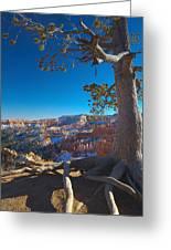 Bryce Pine Greeting Card