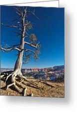 Bryce Tree Greeting Card