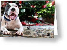Bubba's First Christmas Greeting Card