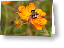 Bubble Bee Greeting Card