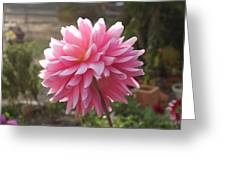 Bubble Gum Dahlia Greeting Card
