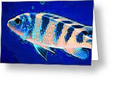 Bubbles - Fish Art By Sharon Cummings Greeting Card