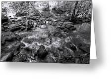 Bubbling Water Brook In The Smokies Greeting Card