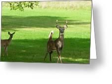 Buck And Doe Greeting Card