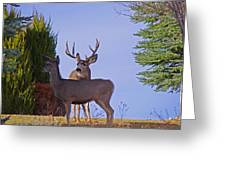 Buck And Doe In Yard Greeting Card