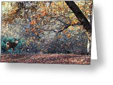 Buck And Fall Foliage Greeting Card