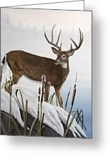 Buck At Waters Edge Greeting Card