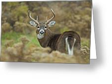 Buck Fever Greeting Card